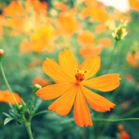 人生に花を咲かせましょう!